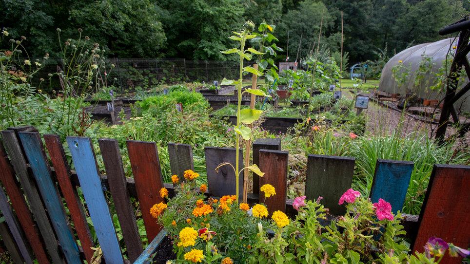 Catrine Bank garden